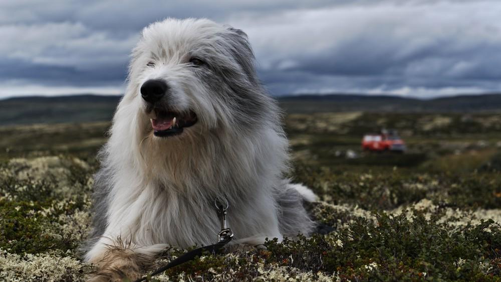Norwegen mit Hund: Wichtige Informationen zur Einreise